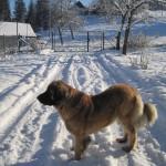 zima2012Gallery059
